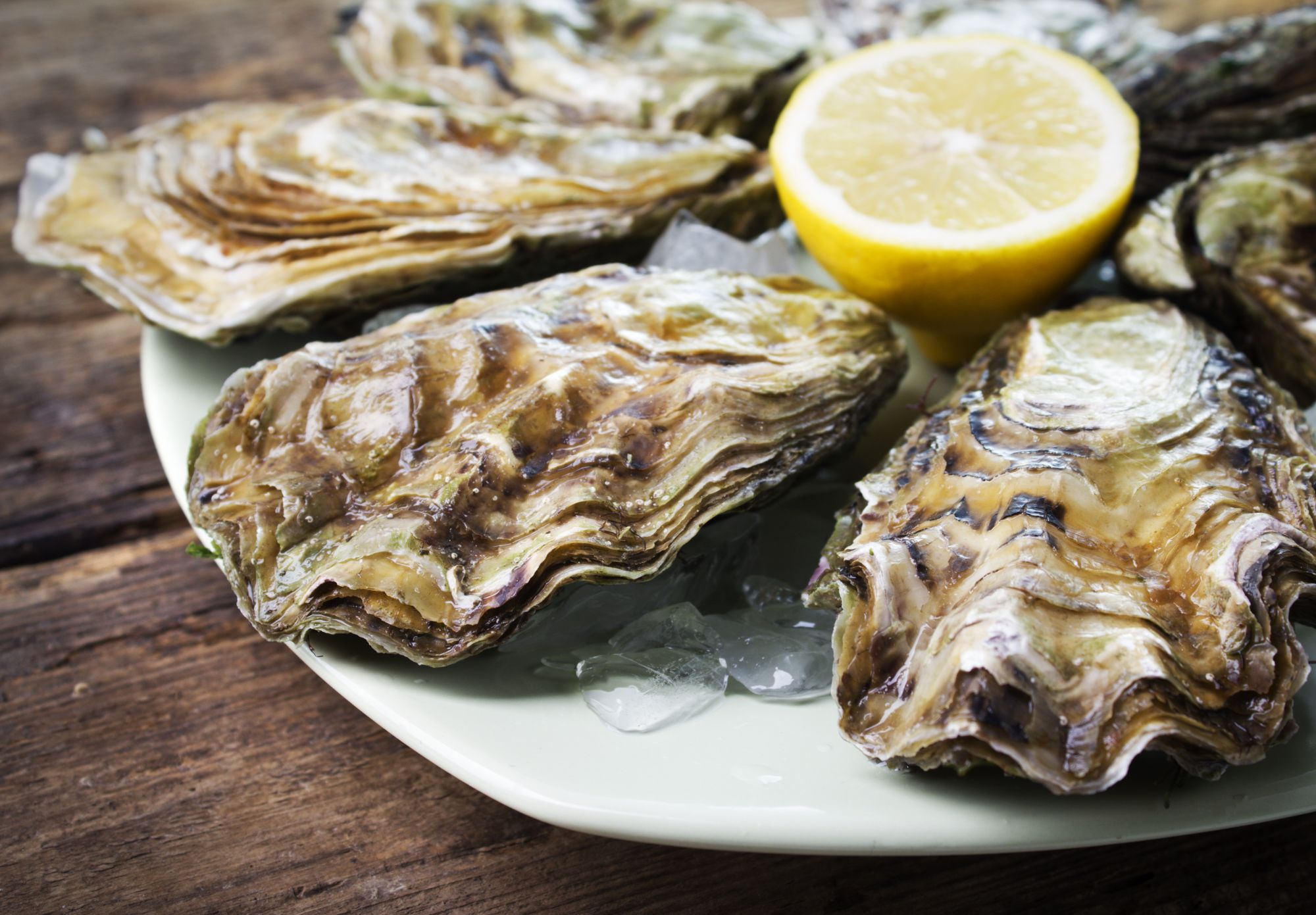 Oysters available from Euclid Fish Company in Cleveland, Ohio